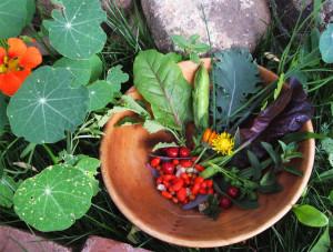 garden-food